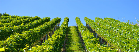 MUST World Wine Tasting Tour – Spain – new date released…