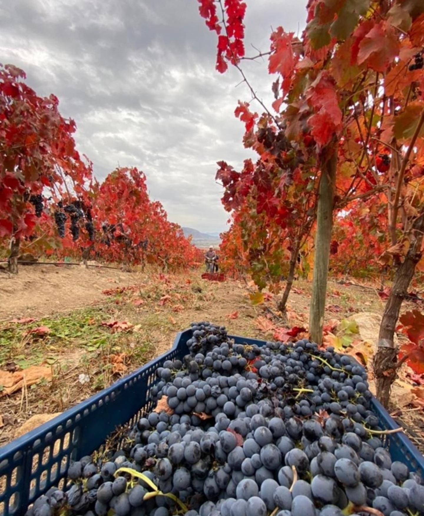 MUST World Wine Tasting Tour – Chile