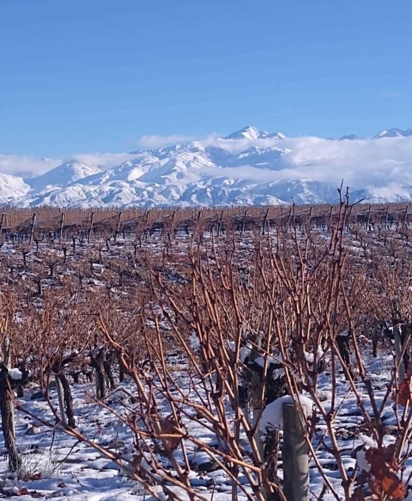 MUST World Wine Tasting Tour – Argentina