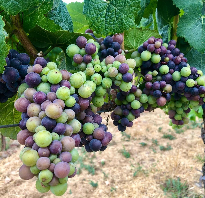 MUST World Wine Tasting Tour – USA
